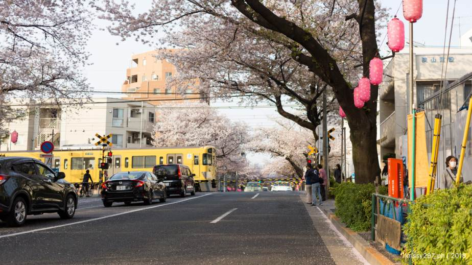 Spring Diary 2019: Nakano SakuraDori